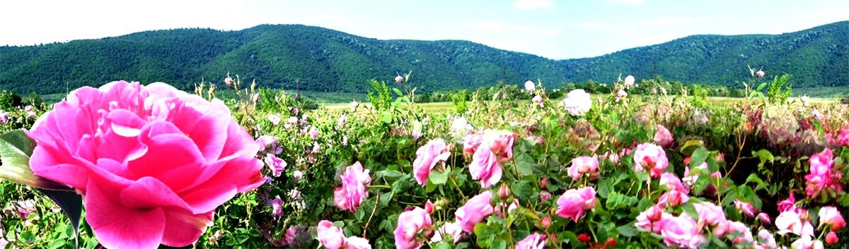 розовая вода гидролат розы крым